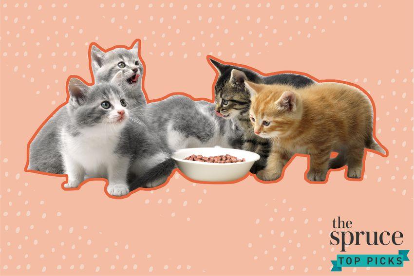 Best Wet Foods for Your Kitten