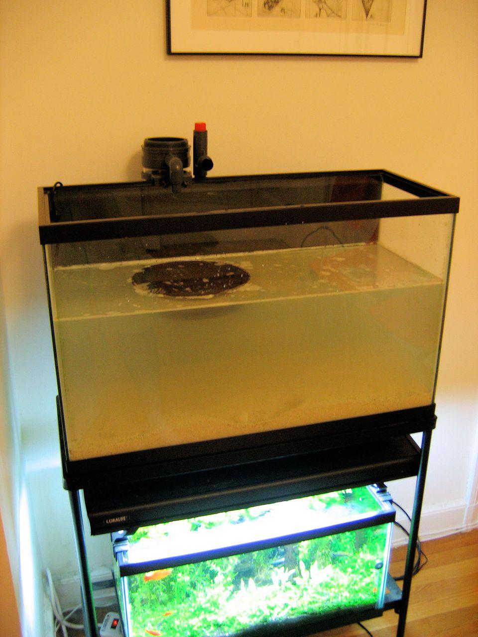 Partially Filled Aquarium - Double Aquarium