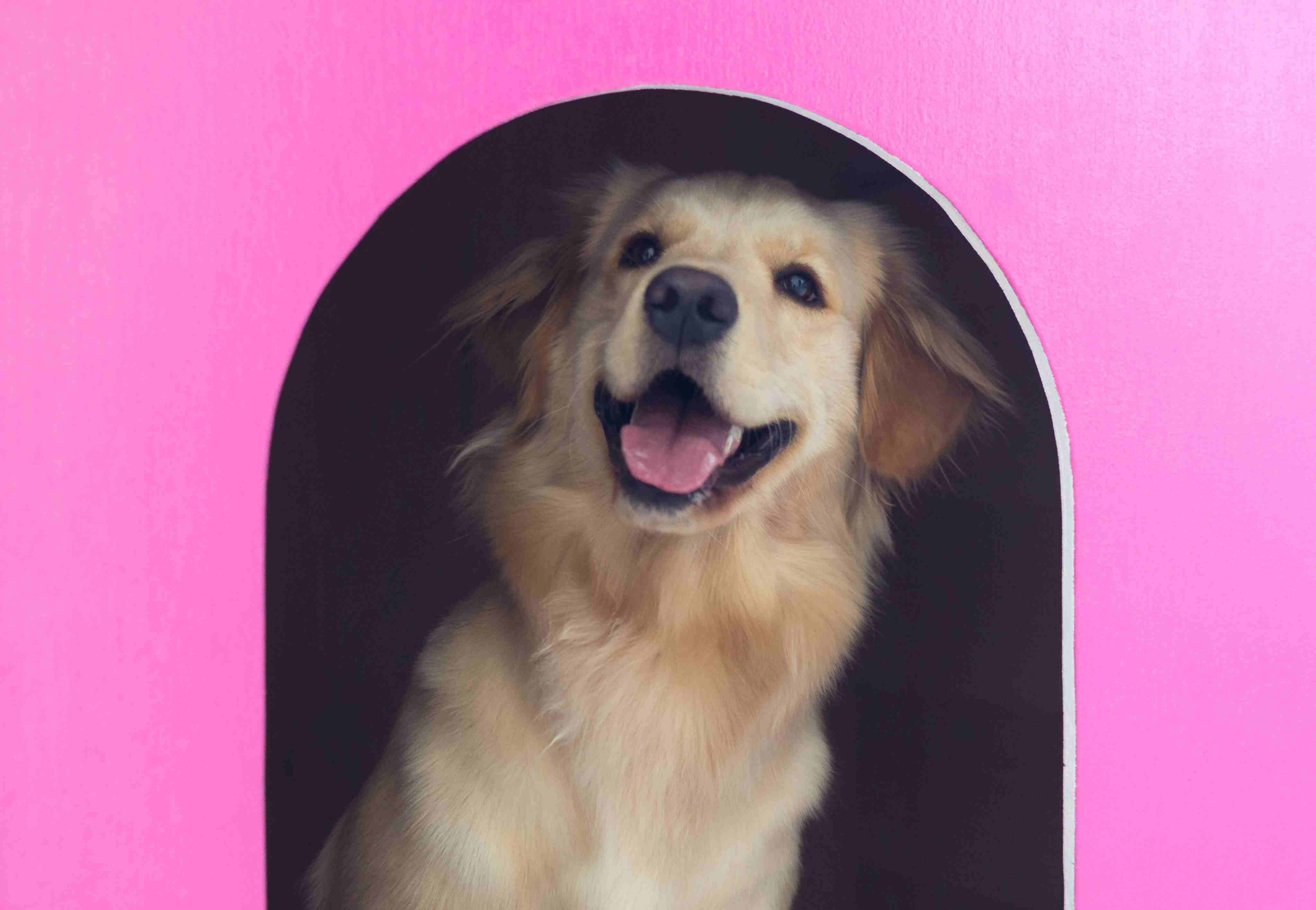 Close-Up Of Dog In Pink Kennel