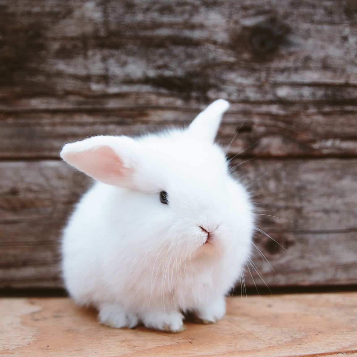 Understanding Rabbit Behavior
