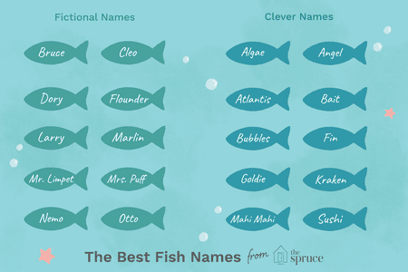 57 Perfect Names for Pet Fish