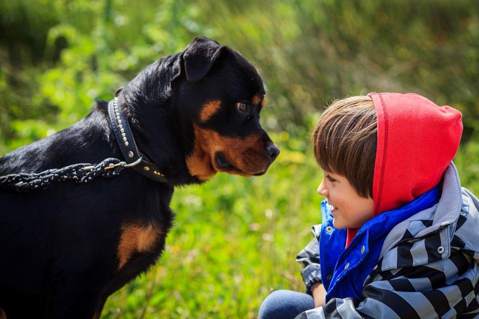 Un niño delante de un rottweiler