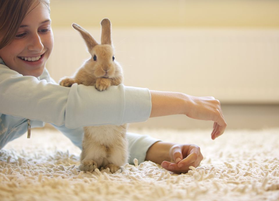 Bunny playing with little girl