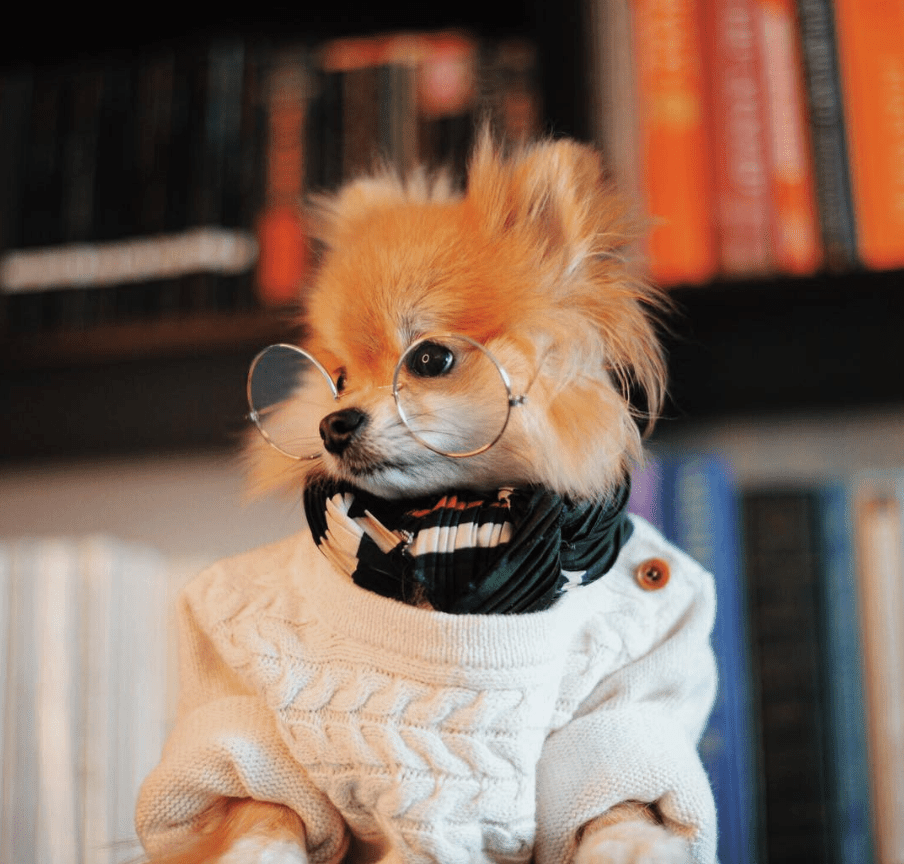 Masticable en suéter, bufanda y anteojos