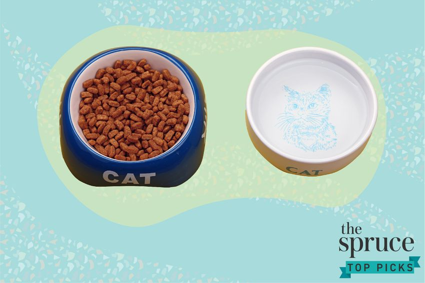 Best Cat Foods for Urinary Tract Health