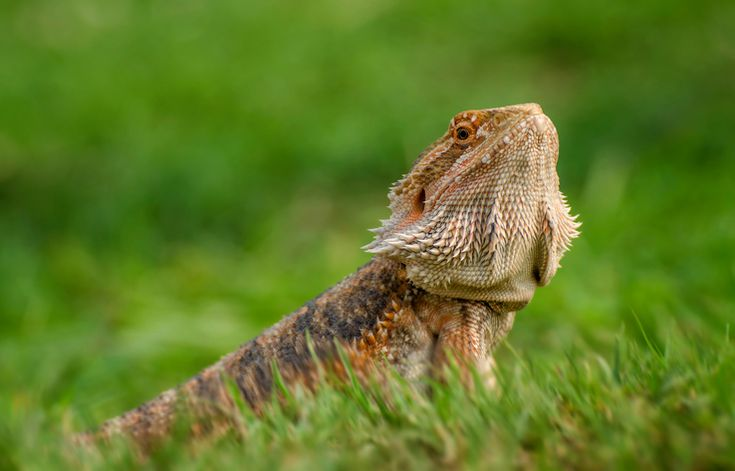 The 9 Best Bearded Dragon Supplies Of 2019