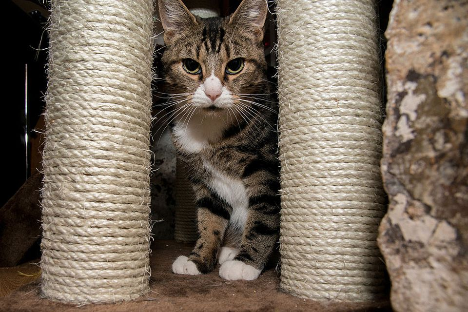 A cat sitting among cat scratchers.