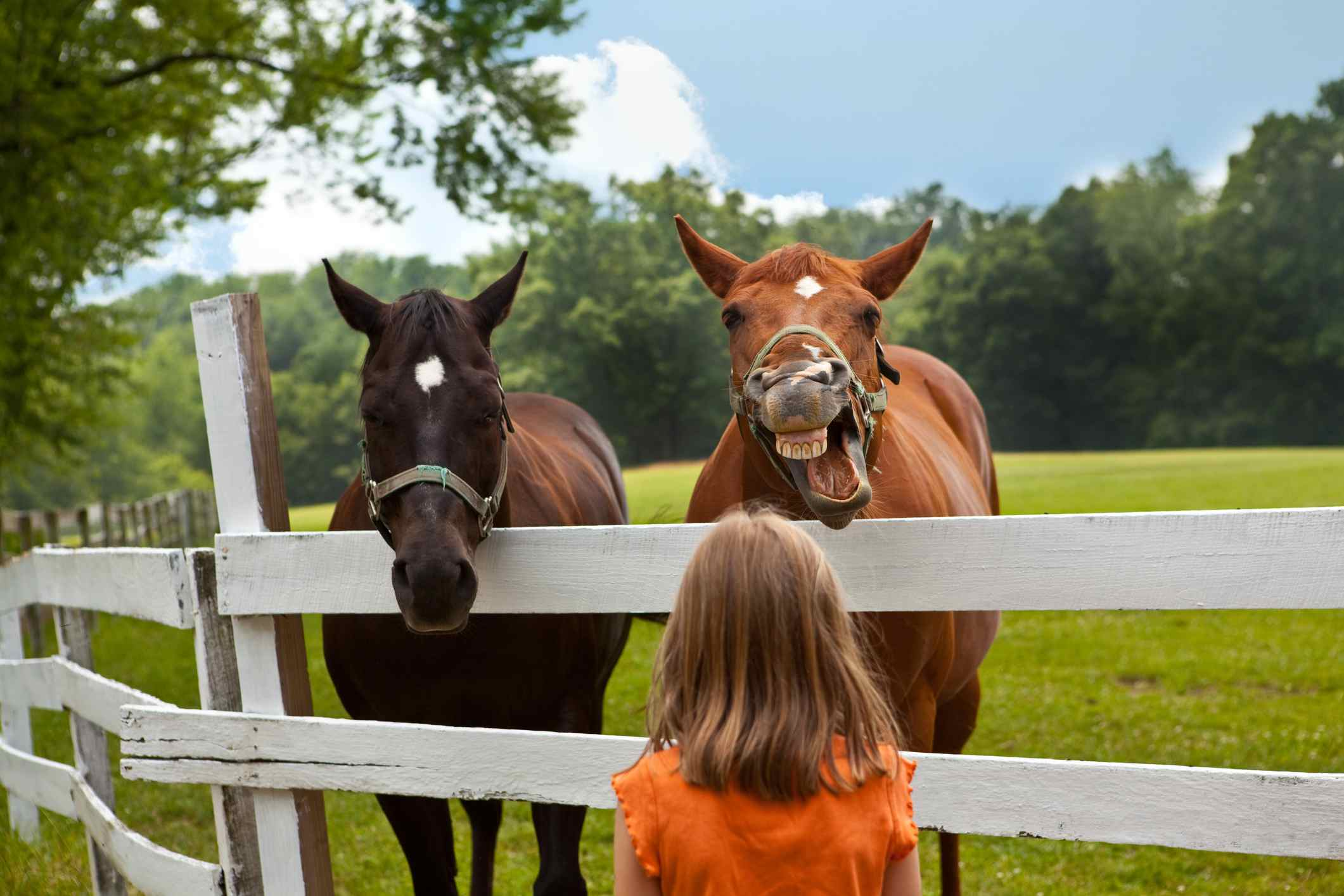 Two horses communicating with girl