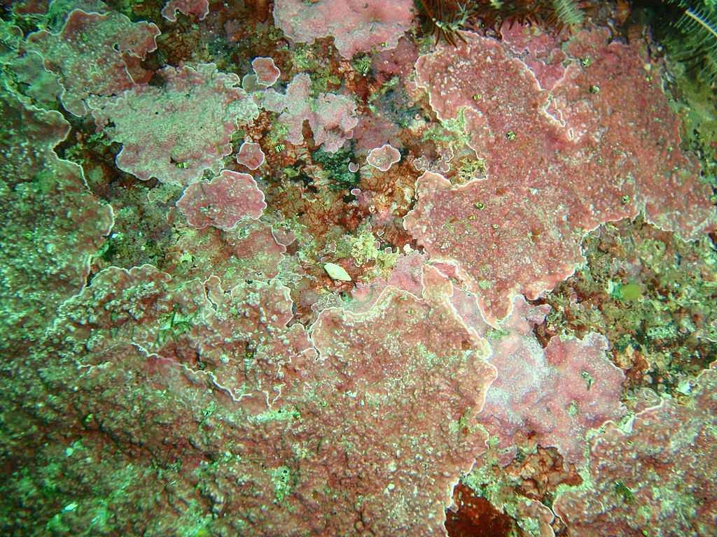 Tank algae