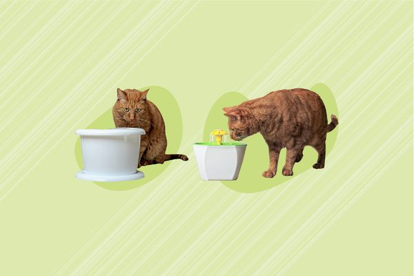Best Cat Water Fountains