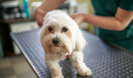 prostatitis in dogs
