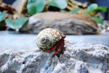 choosing and preparing shells for hermit crabs