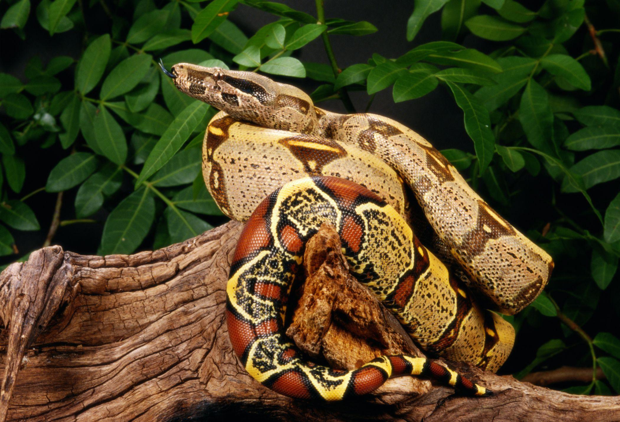Pet Store Snake Food