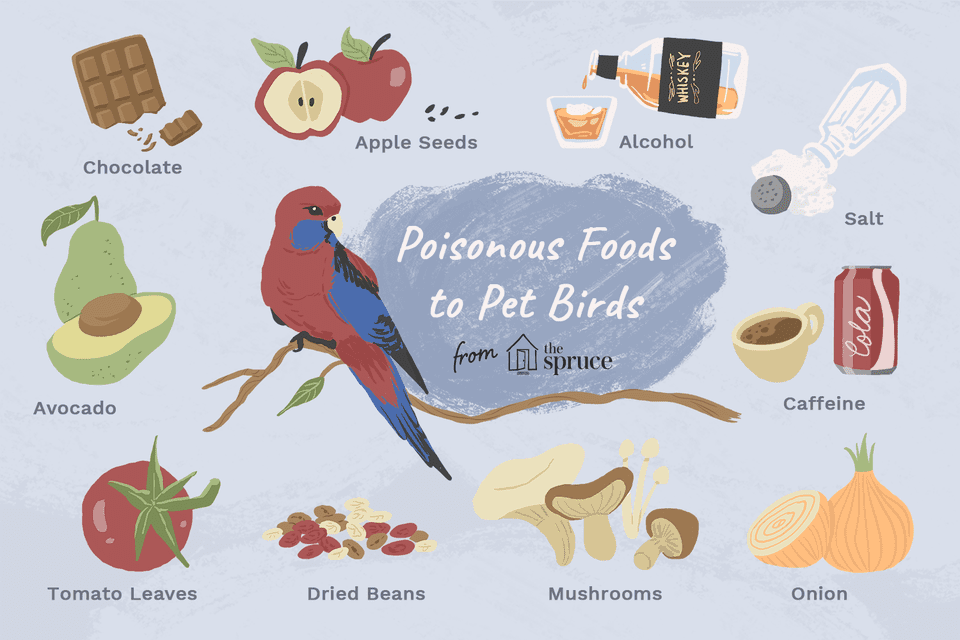 illustration of poisonous foods to pet birds