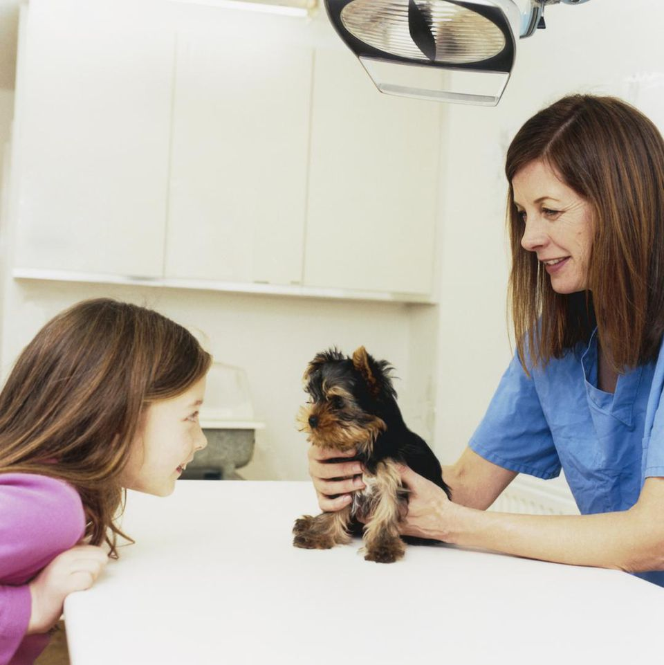 yorkie puppy at vet with child