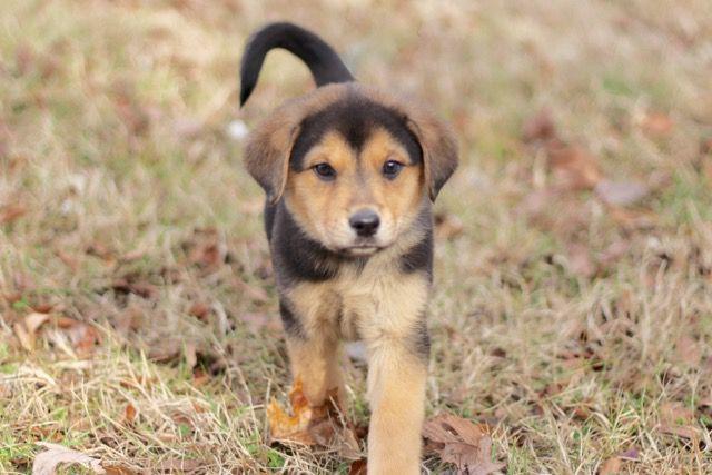 historia de adopción de perros Pippa