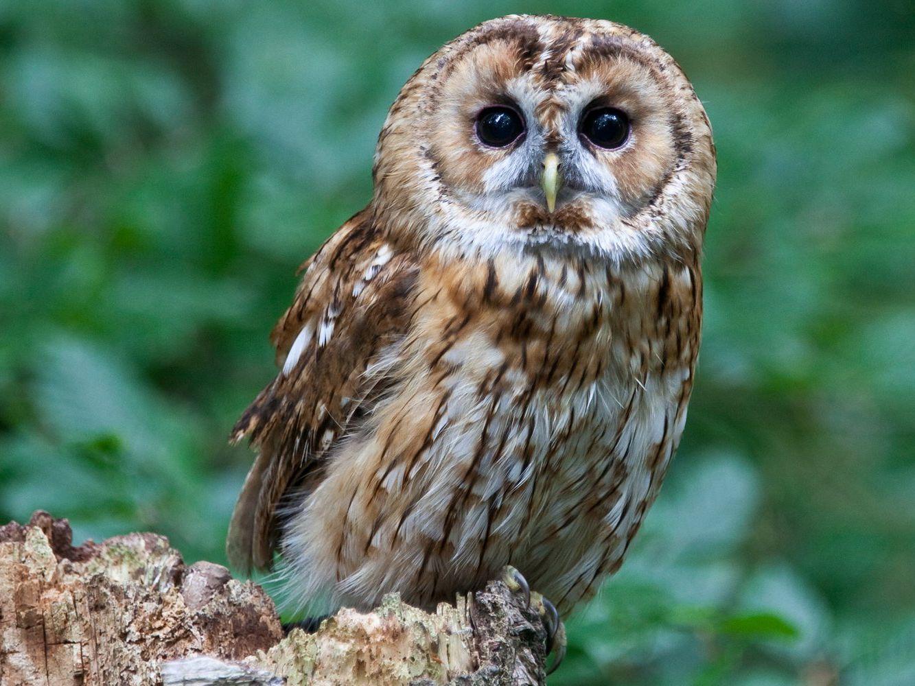6 Reasons Why Owls Make Bad Pets