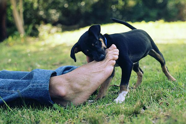 Puppy biting young man's foot, low section