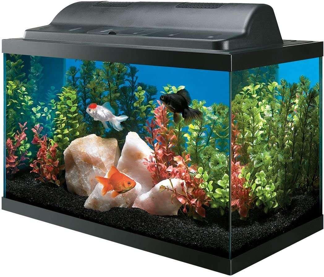 All Glass Aquariums AAG09009 Tank and Eco Hood Combo