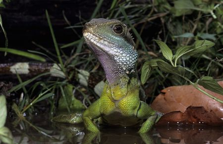 Heat And Uvb Lighting For Pet Water Dragons