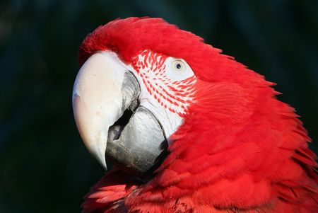 what is parrot eye pinning