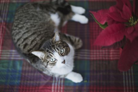 holiday plants that are poisonous to pets