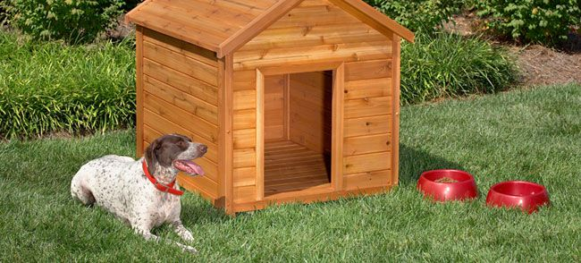 A dog sitting outside by his dog house.