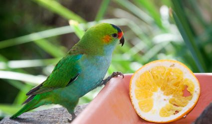 Close-Up Of Parrot Perching On Feeder