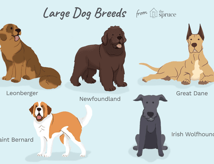 Popular Giant Dog Breeds That Make Good Pets