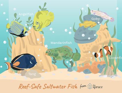 illustration of reef-safe saltwater fish