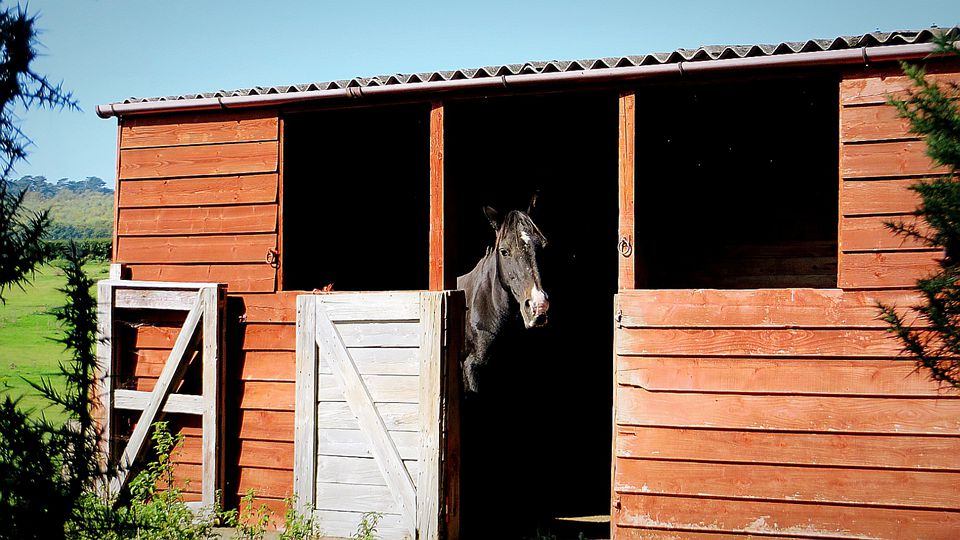 Horse standing in shelter with door open.