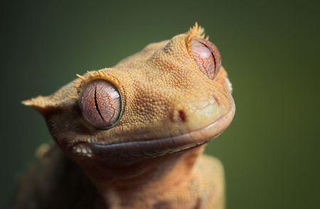 8 irresistibly cute photos of pet reptiles
