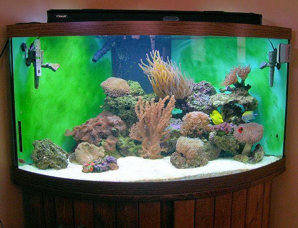 Adding More Fish & Corals