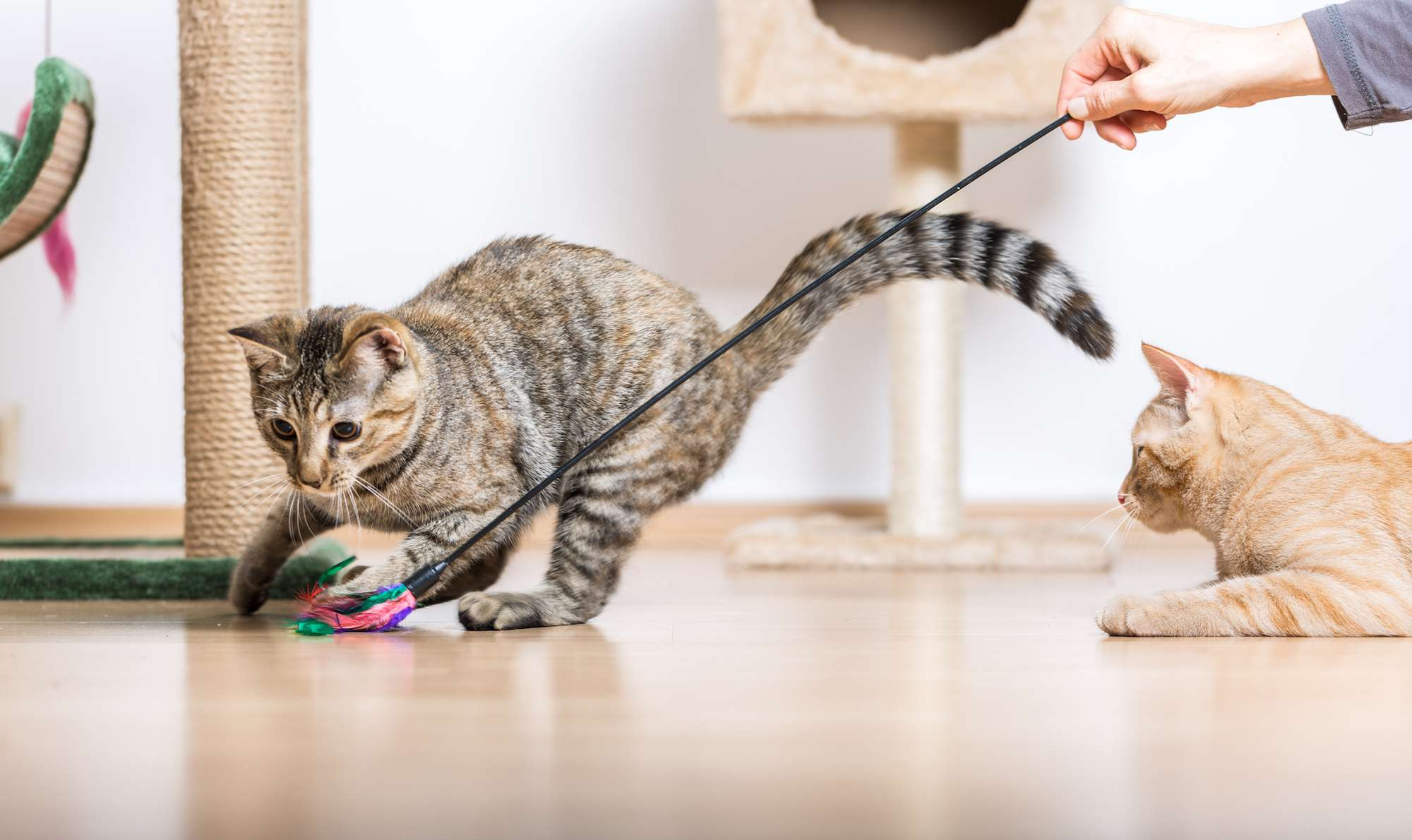 two cats playing two toys