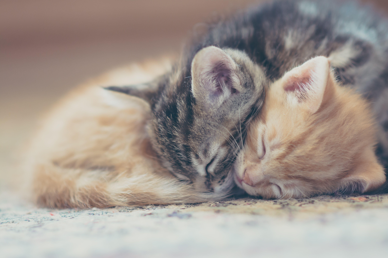 Gatitos para dormir