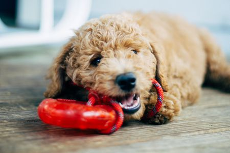 Why Does My Dog Stink? What Can I Do?