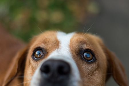 How to Treat Eye Injuries in Dogs