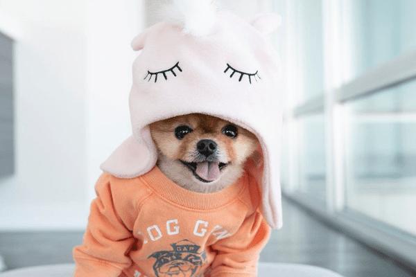 JiffPom in unicorn hat.