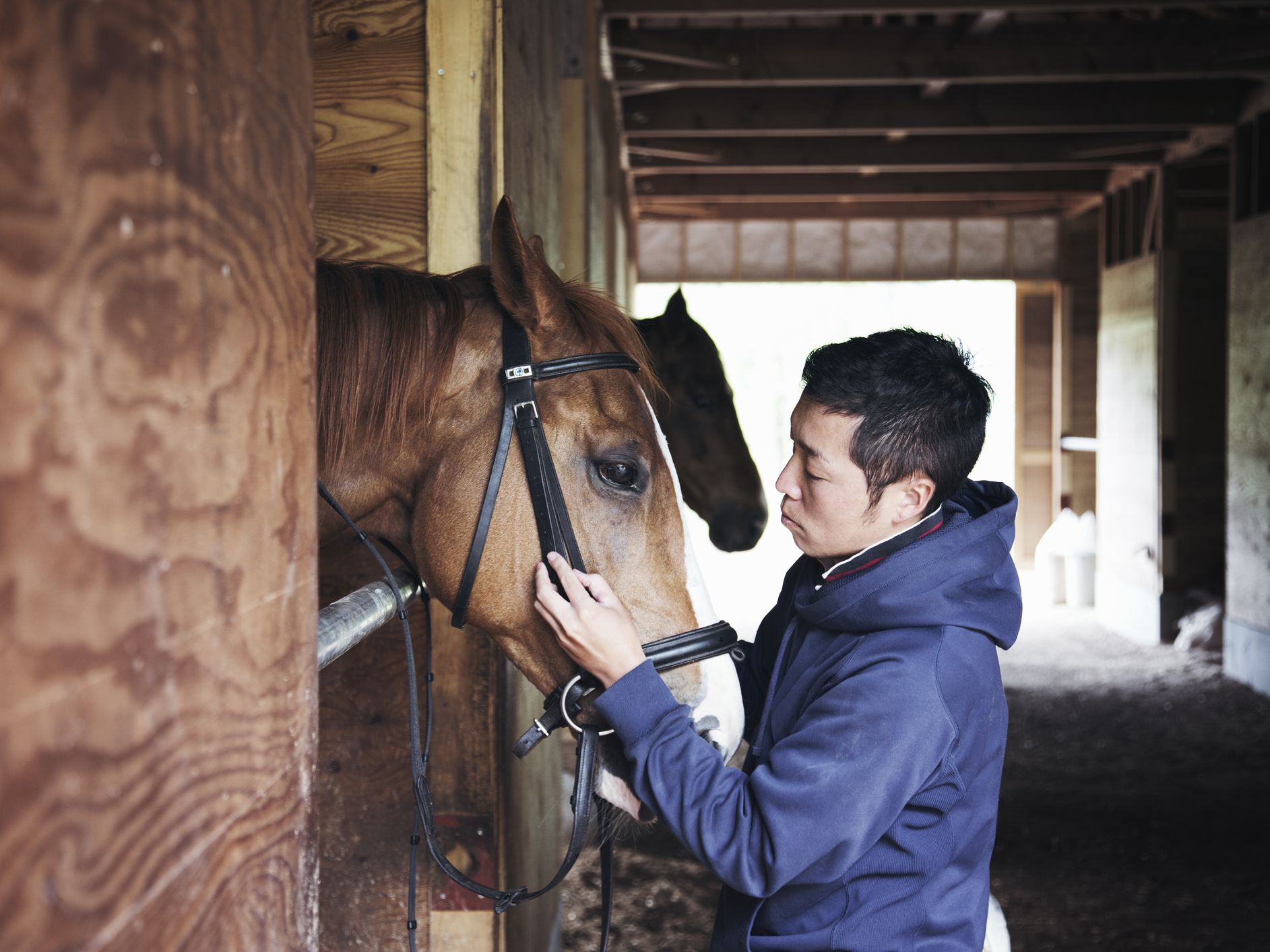 Common Causes of Sudden Death in Horses