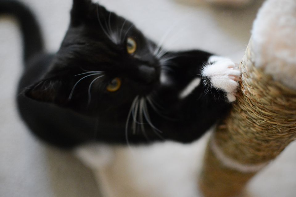Cat claws in a scratching post
