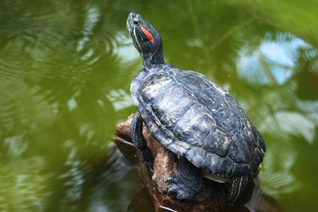 What Should I Feed My Red-Eared Slider Turtle?