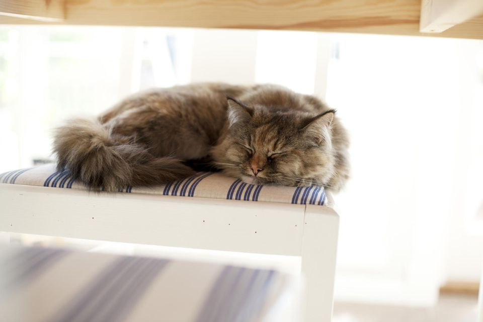 A cat naps on a chair