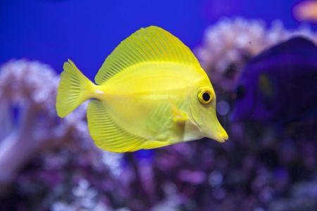 Black Spot or Tang Disease in Fish