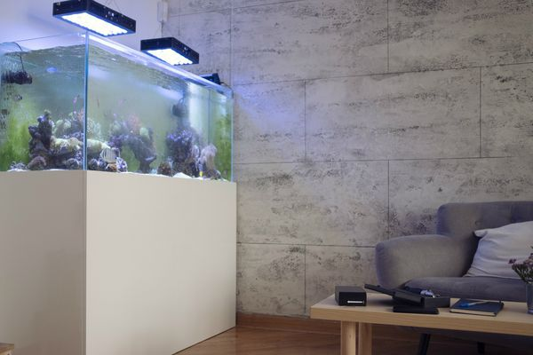 Aquarium with base in a living room