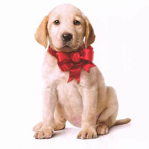 marley and me dog movie, best dog movies