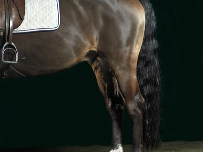Why Most Horses With a Broken Leg Can't Be Saved