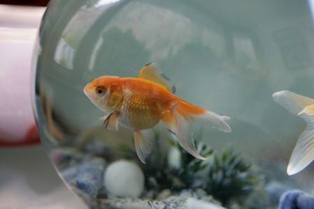 248 Names You Can Give Your Pet Fish