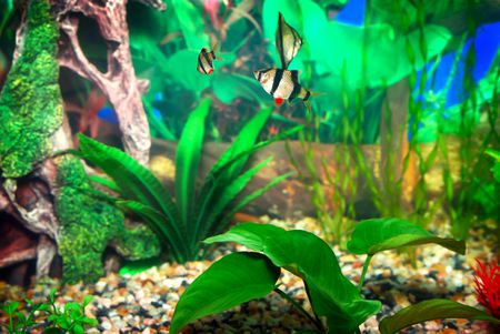 How Nitrate Levels Affect Aquarium Fish