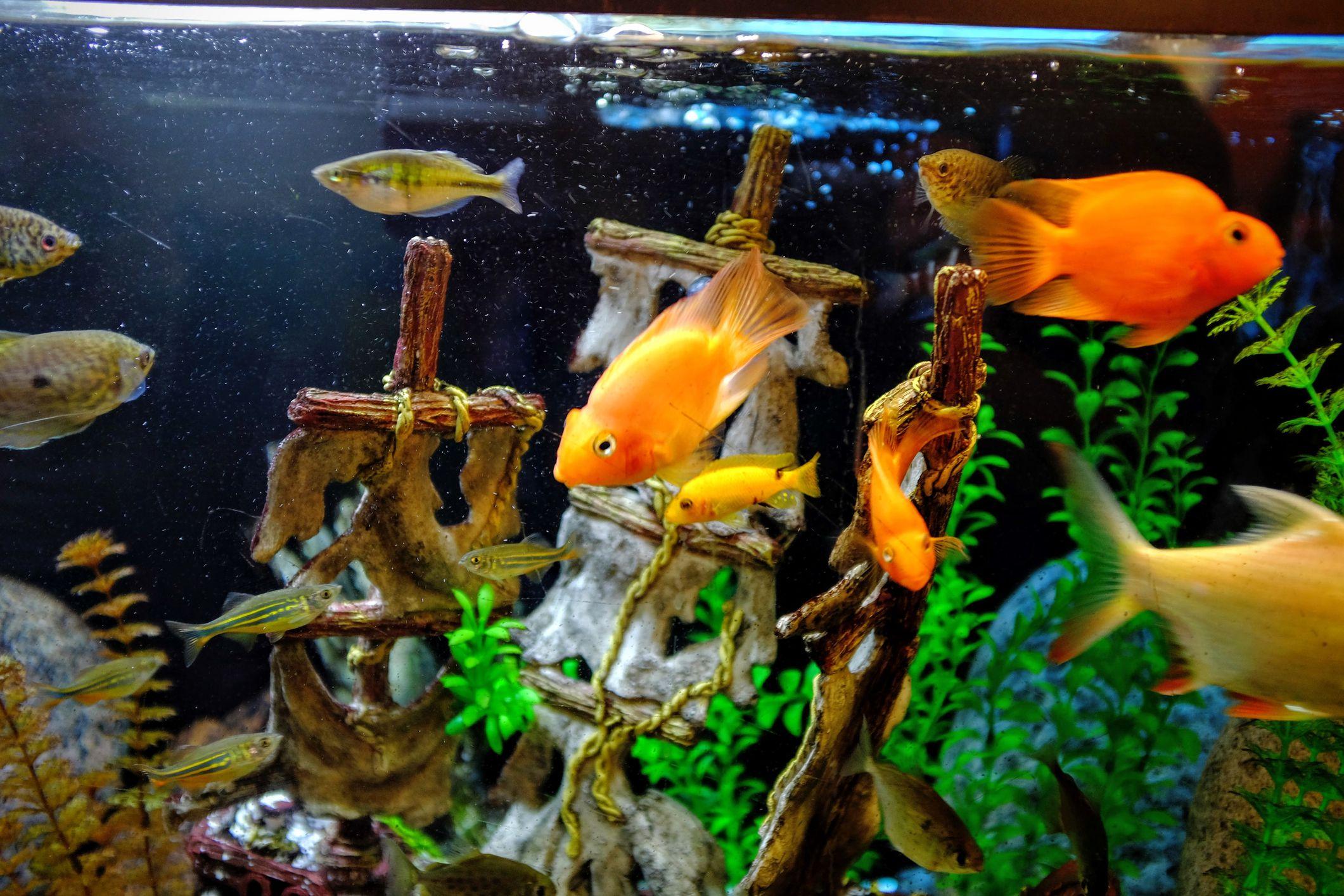 своим картинки всех рыбок в аквариуме идентификатор технически свяжет