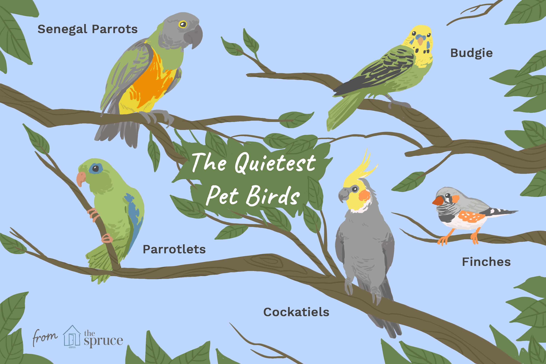 8 Top Quiet Pet Bird Species